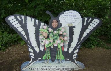 I am butterfly